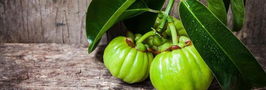 Bienfaits du garnicia cambogia